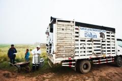 camion acopiador